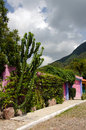 Cacti and colorful mexican house tropical plants cobblestones pink entry to Stock Photos