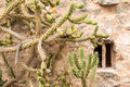 Cacti front a wall in of stonewall in formentera balearic islands spain may Stock Image