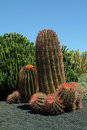Cacti Garden, Fuerteventura Island, Spain Royalty Free Stock Photo