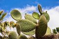 Cacti on the island tenerife Stock Image