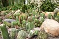 Cacti plants Stock Photos