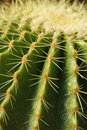 Cactus 1 Royalty Free Stock Photography