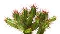 Cactus Royaltyfria Foton