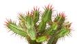 Cactus Arkivbilder