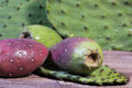 Cactus apple prickly pear two ripening apples also known as pears with thorny leaves from plant on rustic wood surface Royalty Free Stock Photo