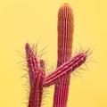 Cactus. Art Gallery Fashion Design. Minimal Royalty Free Stock Photo