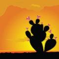 Cactus black with pink flower vector illustration in desert Stock Photo