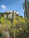 Cactus and boulders  Royalty Free Stock Images