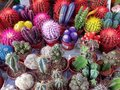 Cactus cactuses in the shop Stock Images