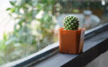 Cactus in cafe a plural cacti cactuses or is a member of the plant family cactaceae within the order caryophyllales the word Royalty Free Stock Photos