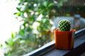 Cactus in cafe a plural cacti cactuses or is a member of the plant family cactaceae within the order caryophyllales the word Royalty Free Stock Photo