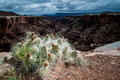 Cactus on canyon rim sun lighting up the needles of a sitting the white of the in canyonlands national park in utah with a storm Royalty Free Stock Images