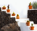Cactus clay pots in Lanzarote over white stairs Royalty Free Stock Photography