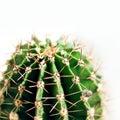 Cactus close up Royalty Free Stock Photo