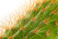 Cactus close up of s thorn to present the pattern Royalty Free Stock Images