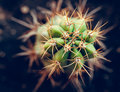 Cactus close up of a small Stock Image