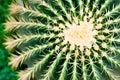 Cactus close-up. Succulent plant detail. Royalty Free Stock Photo