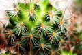 Cactus close up with water drops Royalty Free Stock Images