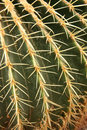 Cactus closeup Royalty Free Stock Photography