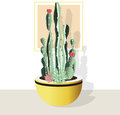 Cactus collection on white background.