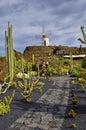 Cactus de jardin 库存照片