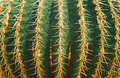 Cactus desert background for design Stock Photography