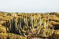 Cactus in the desert at sunset tenerife south canary islands spain Stock Photo