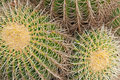 Cactus detail view of a Royalty Free Stock Photo