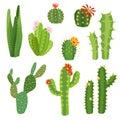 Cactus flower. Bright cacti aloe leaves exotic cactuses plants summer desert tropical flora cartoon botanical collection