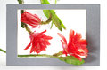 Cactus flower in a frame on white Royalty Free Stock Photo