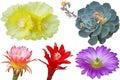 Cactus flower Set Royalty Free Stock Photo