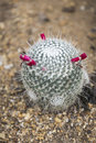 Cactus in garden with detail Stock Photo