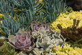 Cactus garden a is in full bloom on a sunny summer day Stock Photography