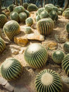 Cactus garden group of in greenhouse Royalty Free Stock Photos
