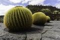 Cactus garden in lanzarote wide view of the jardin de designed by cesar manrique guatiza canary islands spain Royalty Free Stock Photo
