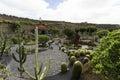 Cactus garden in lanzarote wide view of the jardin de designed by cesar manrique guatiza canary islands spain Royalty Free Stock Photography