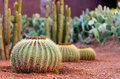 Cactus garden with a multitude of different plants Stock Images