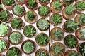 Cactus garden Royalty Free Stock Photo