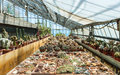 Cactus in a greenhouse in the garden of exotic plants Pallanca in Bordighera, Italy. Royalty Free Stock Photos