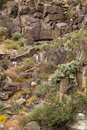 Cactus growing from rocky mountainside in Arizona Royalty Free Stock Images
