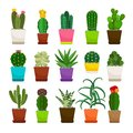 Cactus houseplants in flower pots set Royalty Free Stock Photo