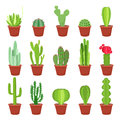 Cactus icons in a flat style on a white background. Home plants cactus in pots and with flowers. A variety of decorative