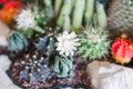 Cactus image on stock photo Royalty Free Stock Photo