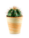 Cactus.Isolated. Obraz Stock