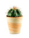 Cactus.Isolated. Стоковое Изображение