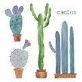 Kaktus izolované na bielom pozadí