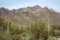 Cactus landscape cacti dot the of tucson s sabino canyon Royalty Free Stock Photography