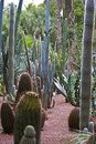 Cactus in landscaped garden Royalty Free Stock Photography