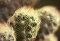 Cactus macro plant details background Stock Images