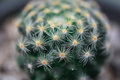Cactus macro shot mini closeup Royalty Free Stock Photos
